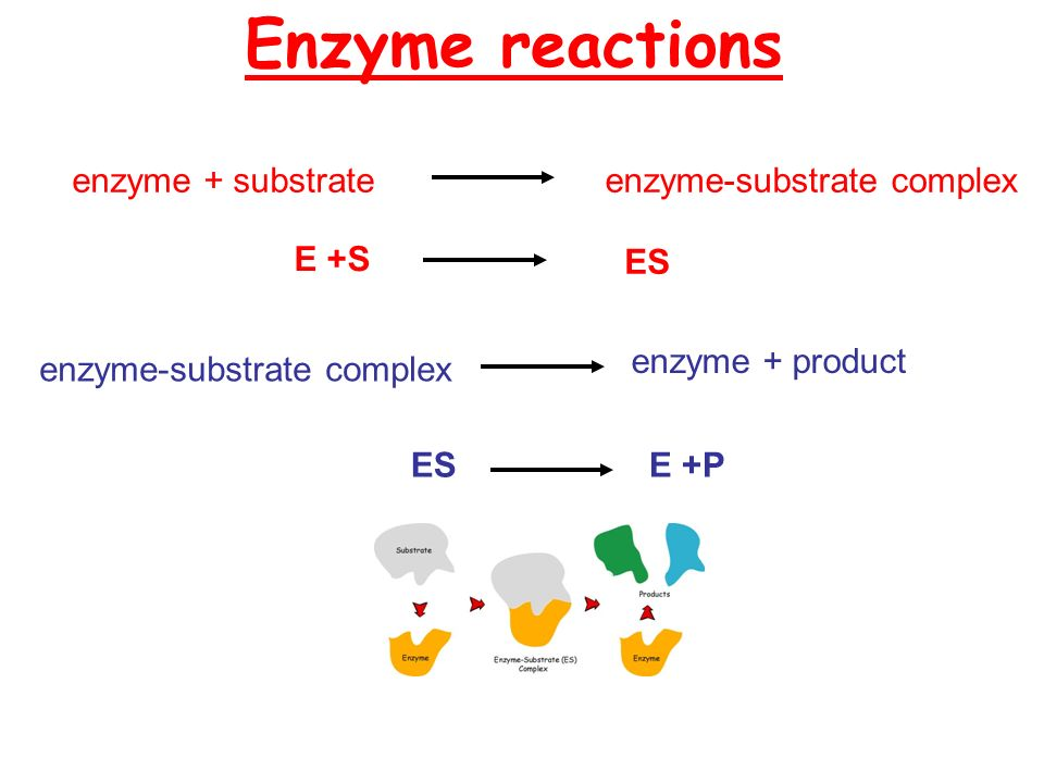 What are they? Enzymes Why do we need them? Name some ...