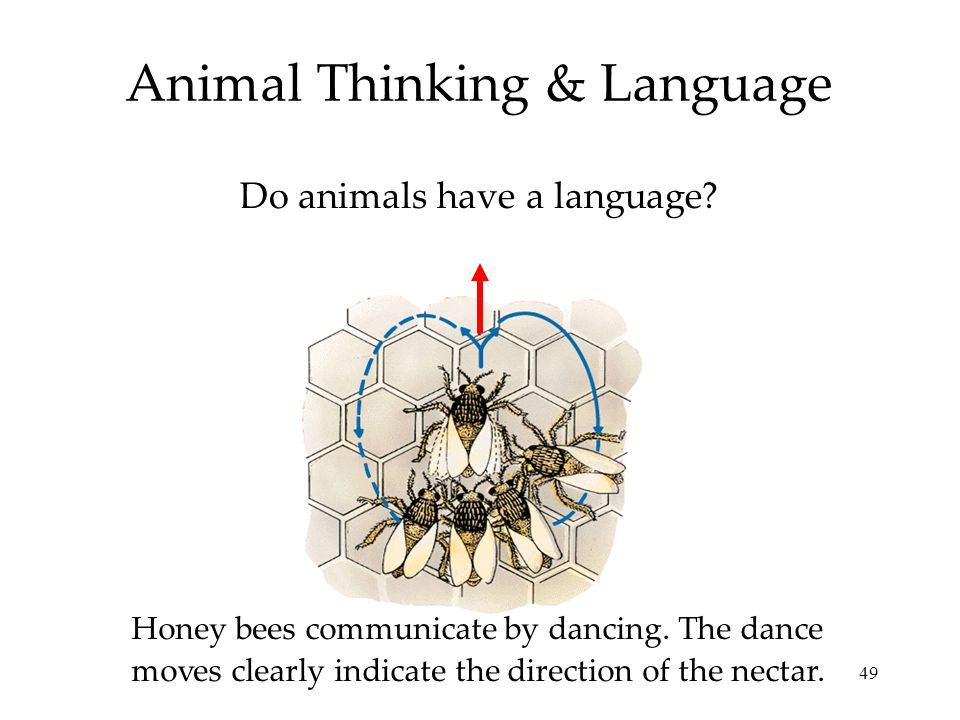 Animal Thinking & Language