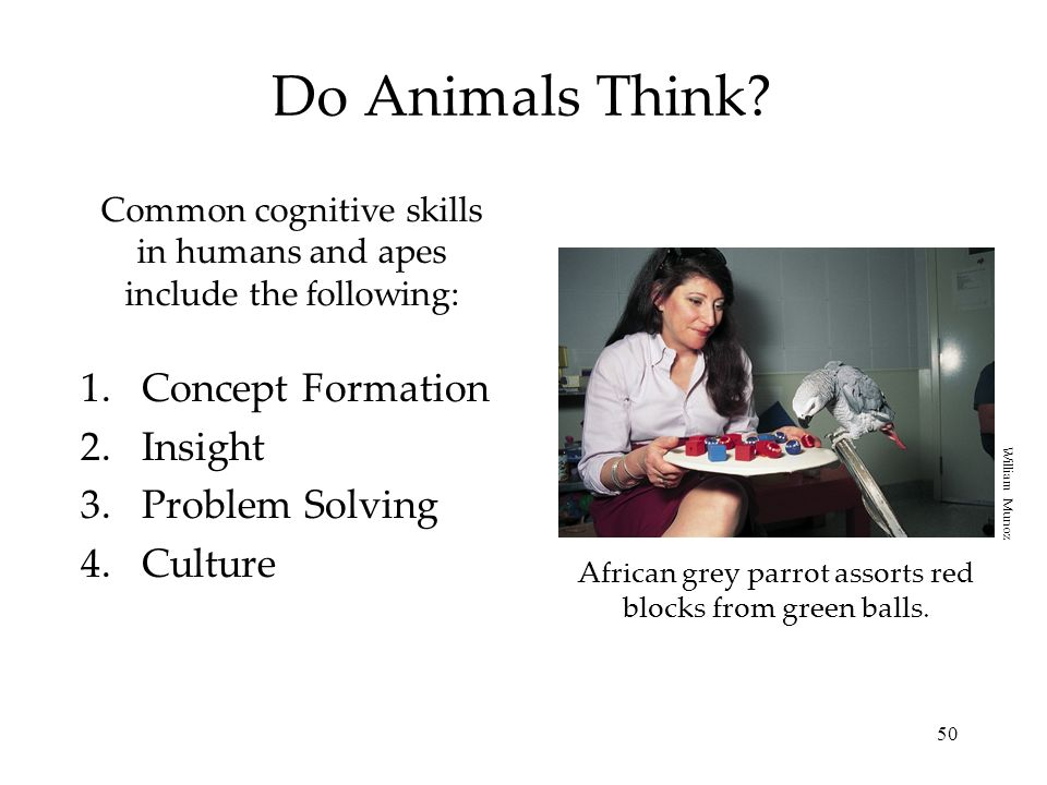 Do Animals Think Concept Formation Insight Problem Solving Culture