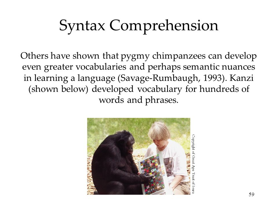 Syntax Comprehension
