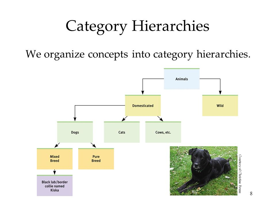 We organize concepts into category hierarchies.