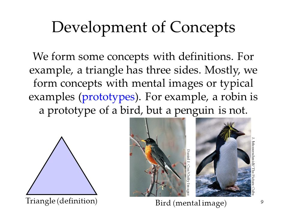 Development of Concepts