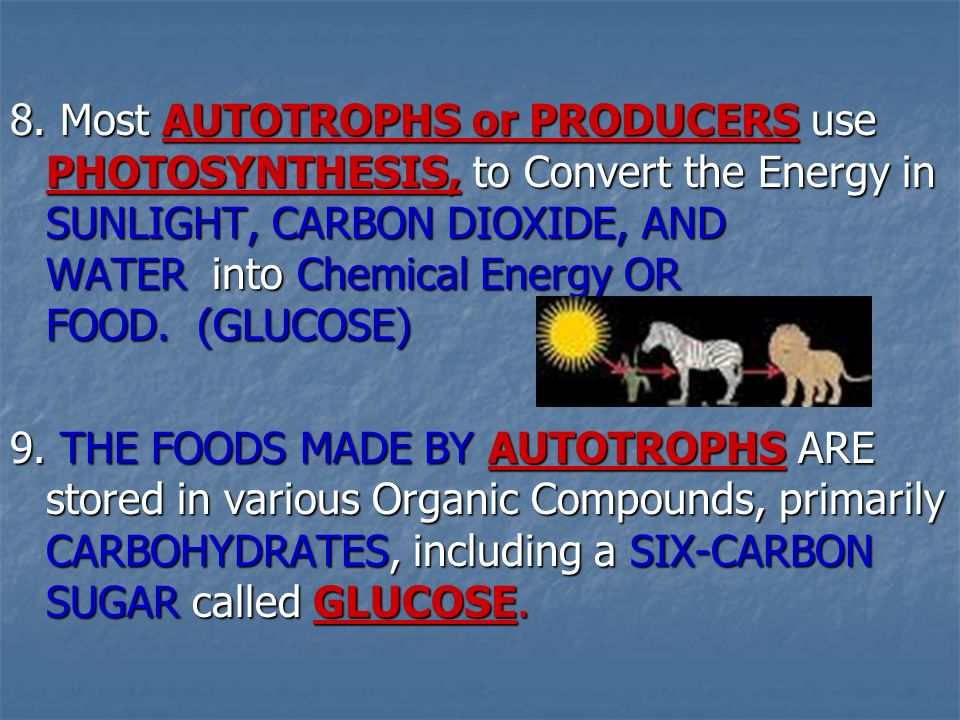 8. Most AUTOTROPHS or PRODUCERS use PHOTOSYNTHESIS, to Convert the Energy in SUNLIGHT, CARBON DIOXIDE, AND WATER into Chemical Energy OR FOOD. (GLUCOSE)