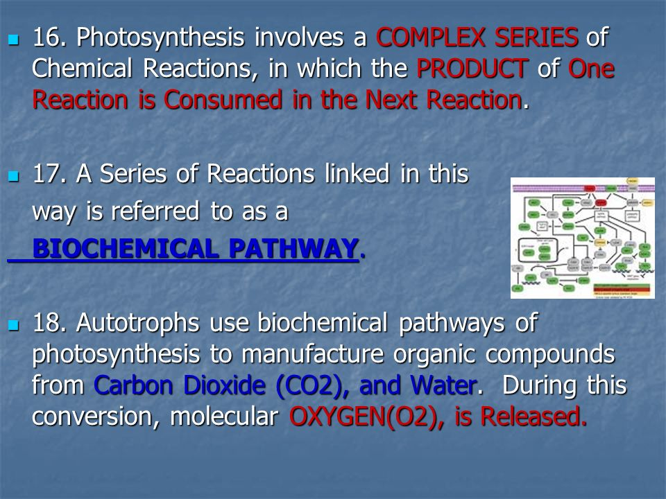 16. Photosynthesis involves a COMPLEX SERIES of Chemical Reactions, in which the PRODUCT of One Reaction is Consumed in the Next Reaction.