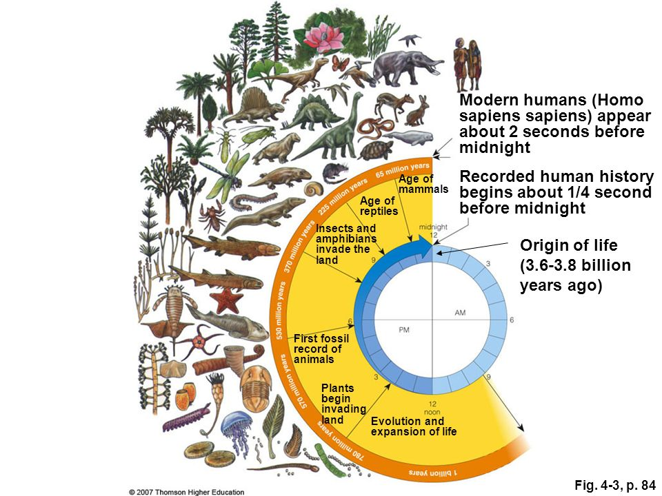 Recorded human history begins about 1/4 second before midnight