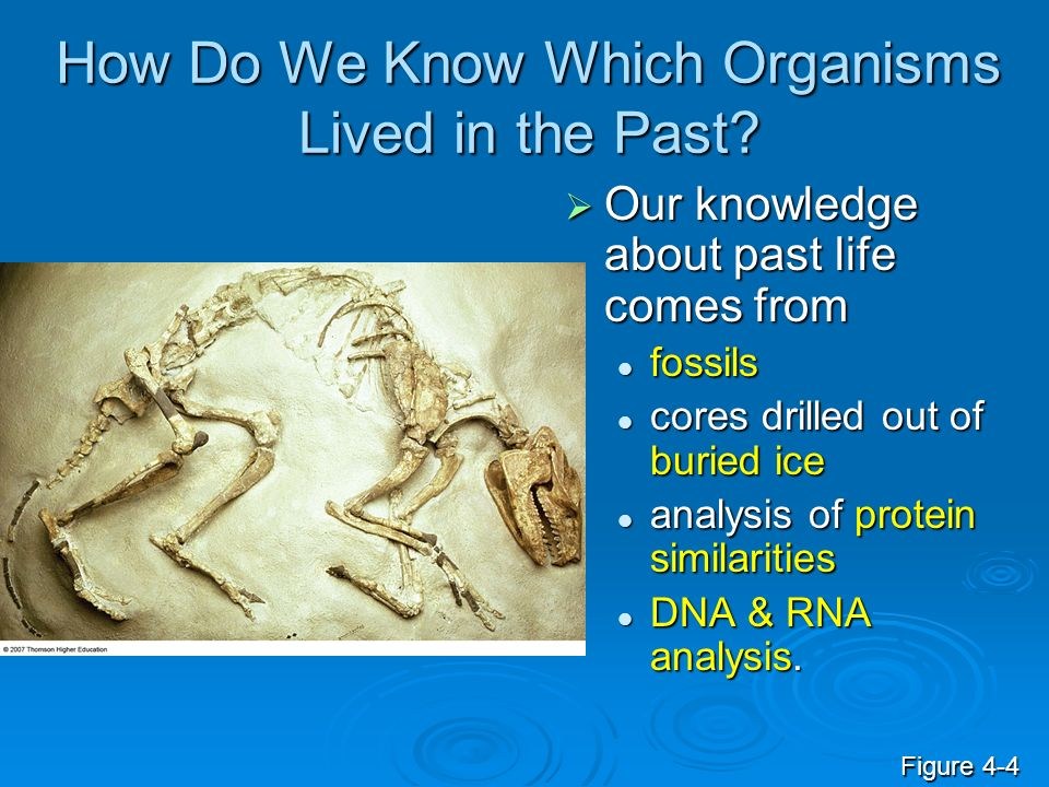 How Do We Know Which Organisms Lived in the Past