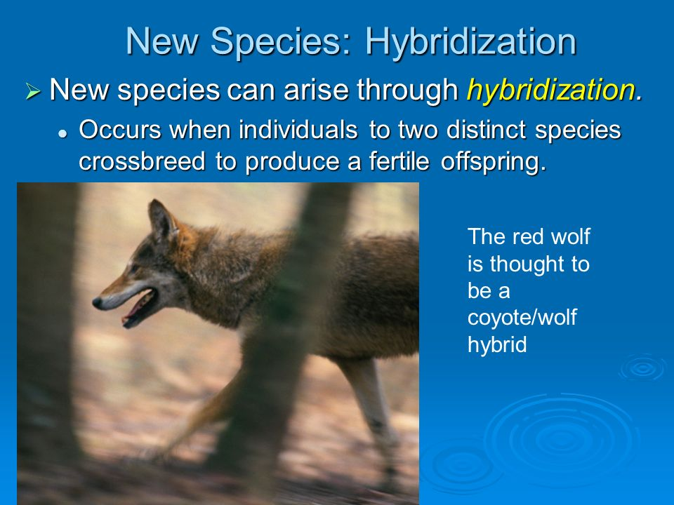 New Species: Hybridization