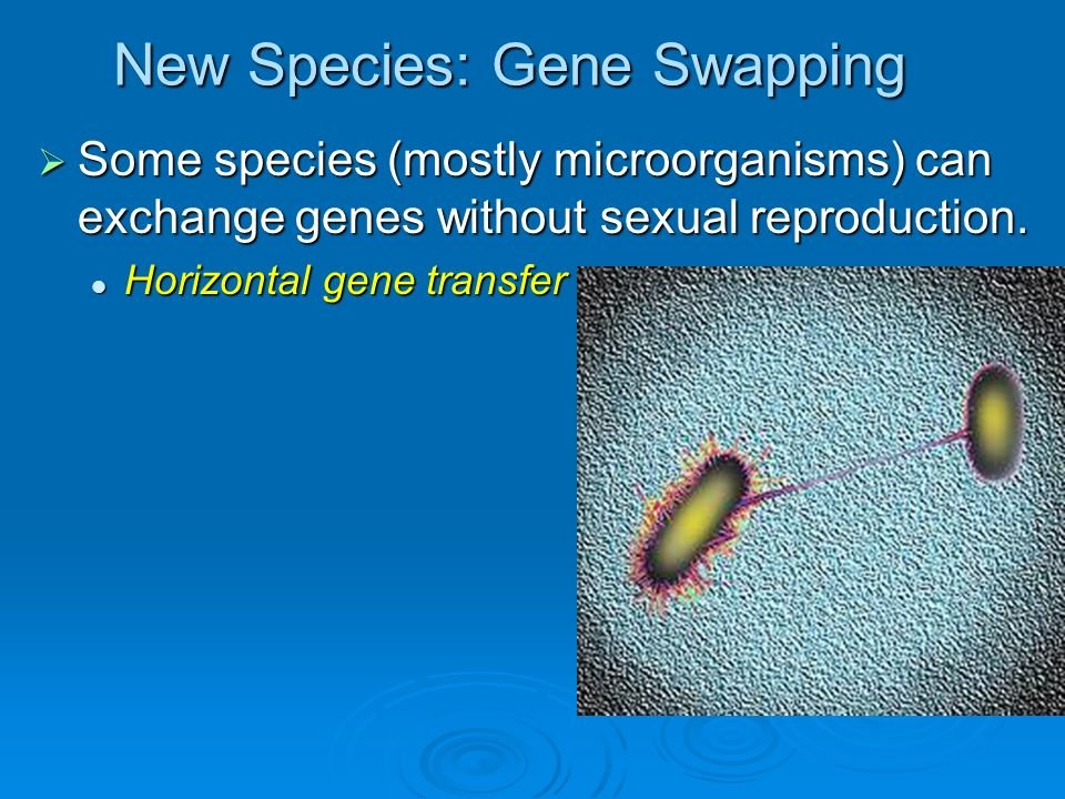 New Species: Gene Swapping