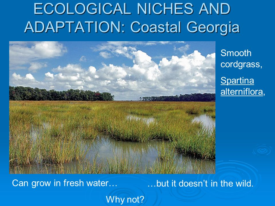 ECOLOGICAL NICHES AND ADAPTATION: Coastal Georgia