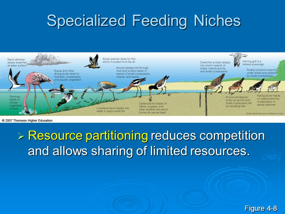 Specialized Feeding Niches