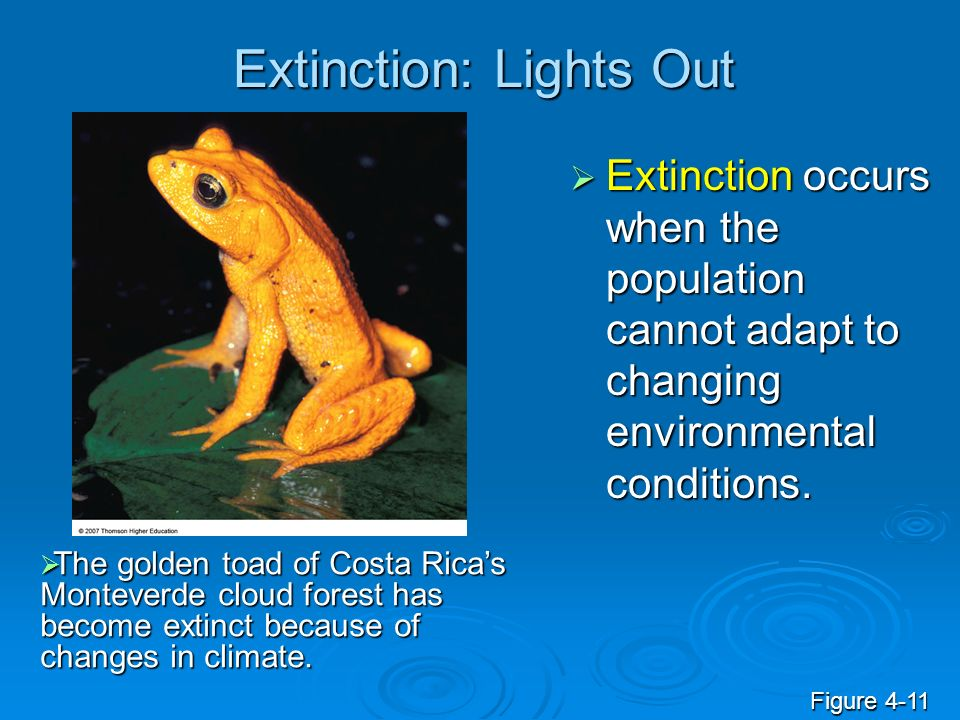 Extinction: Lights Out