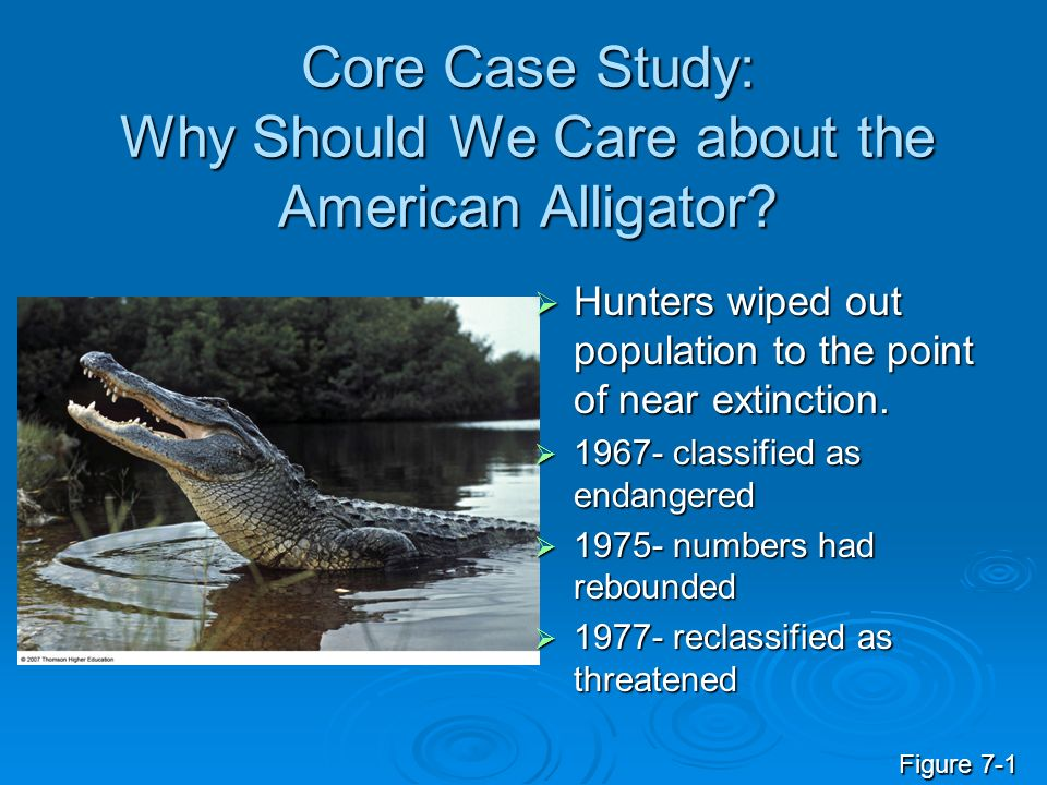 Core Case Study: Why Should We Care about the American Alligator