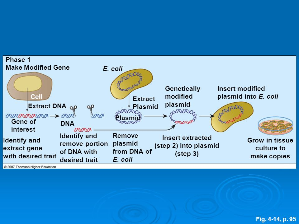 Identify and remove portion of DNA with