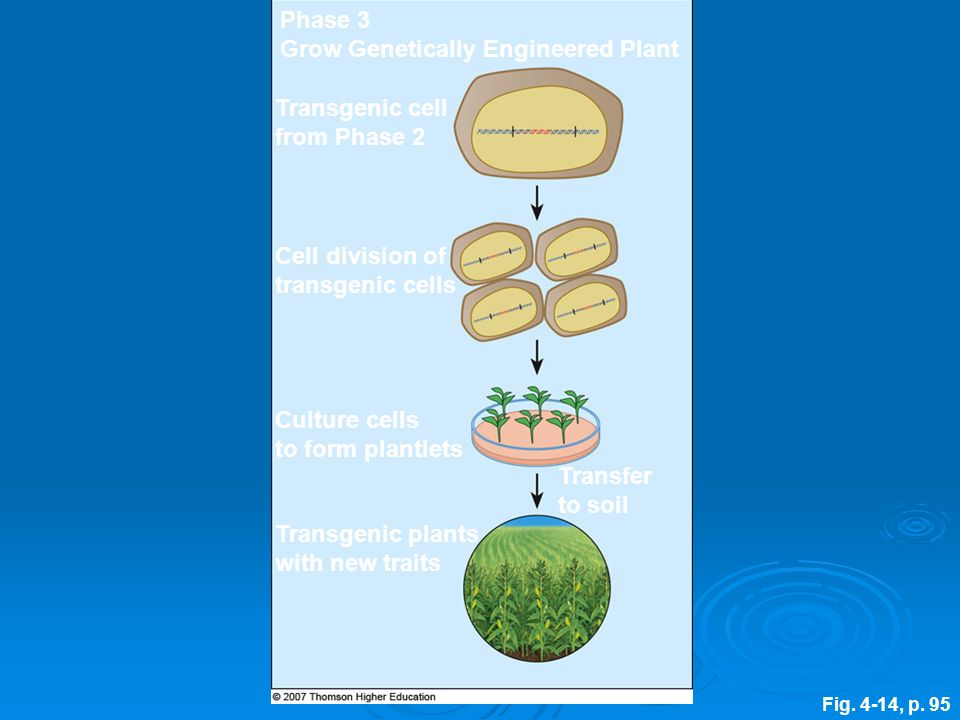 Grow Genetically Engineered Plant