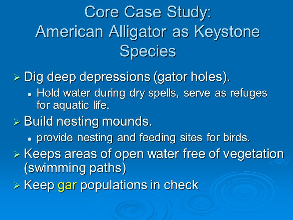Core Case Study: American Alligator as Keystone Species