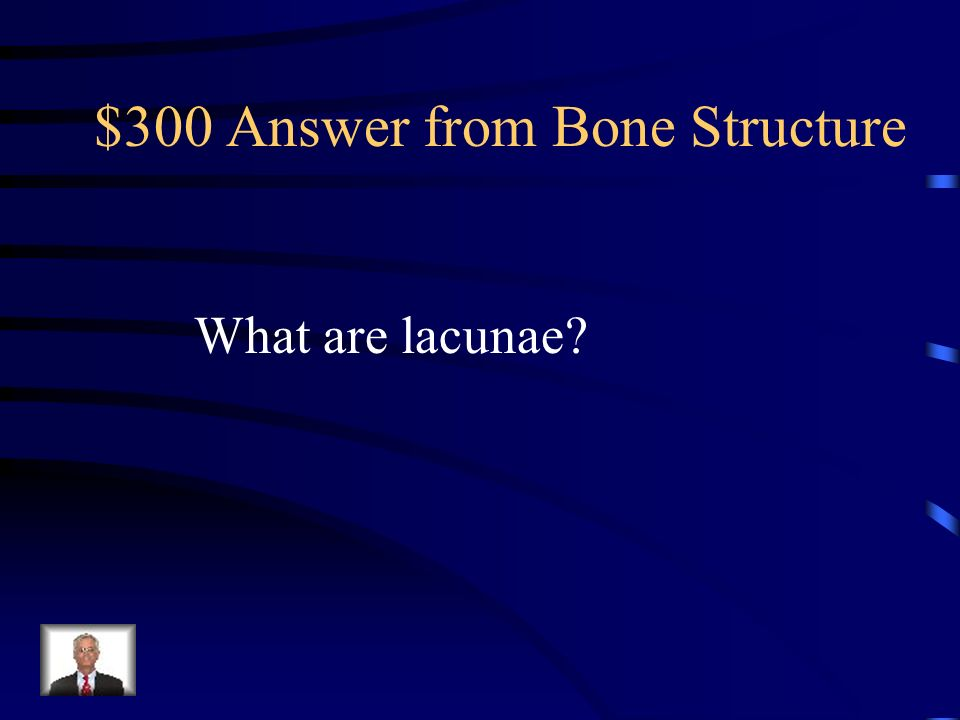 $300 Answer from Bone Structure