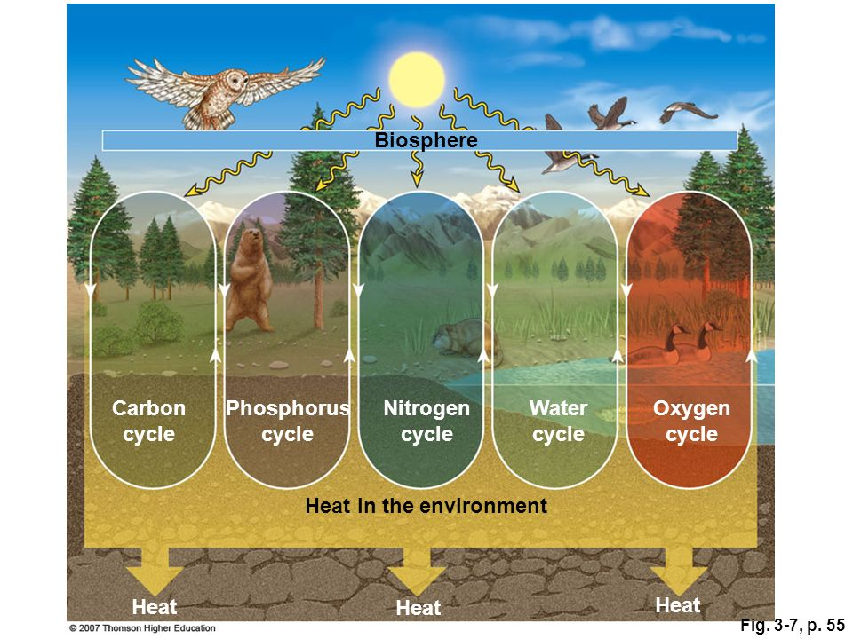 Carbon cycle Phosphorus cycle Nitrogen cycle Water cycle Oxygen cycle