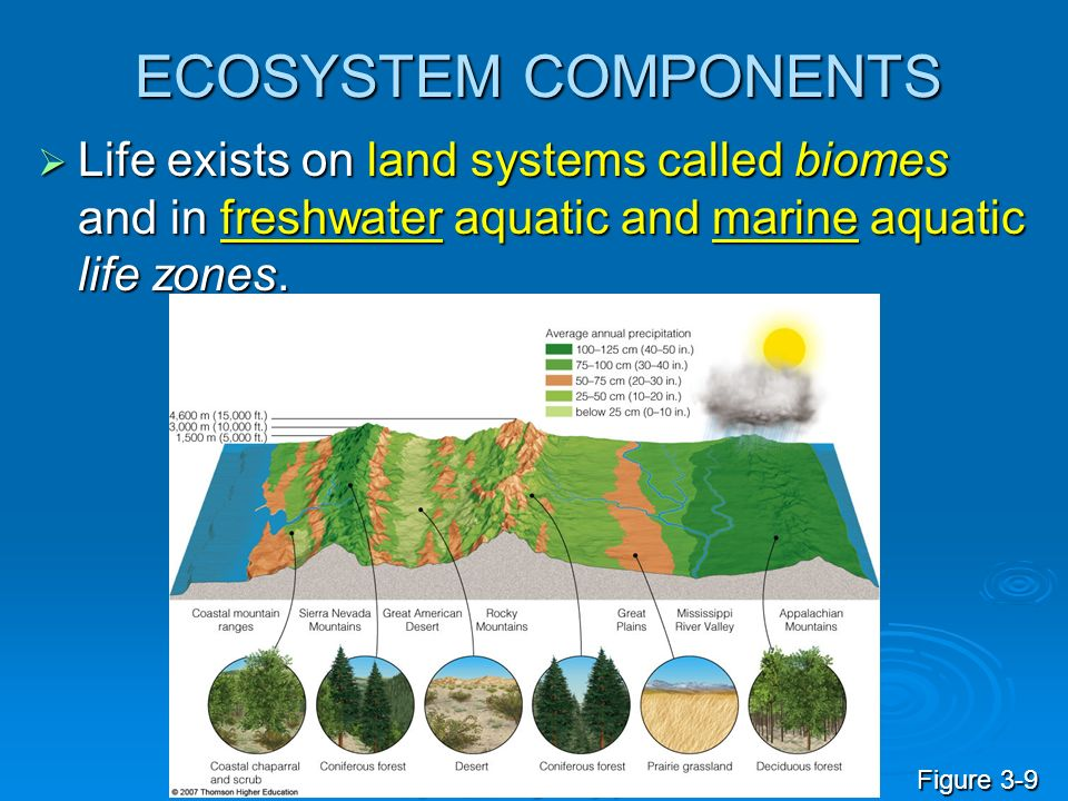 ECOSYSTEM COMPONENTS Life exists on land systems called biomes and in freshwater aquatic and marine aquatic life zones.