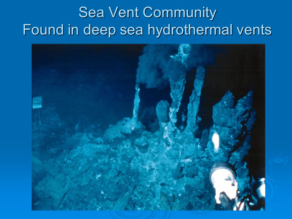 Deep-Sea Vents: Life Without Sunlight