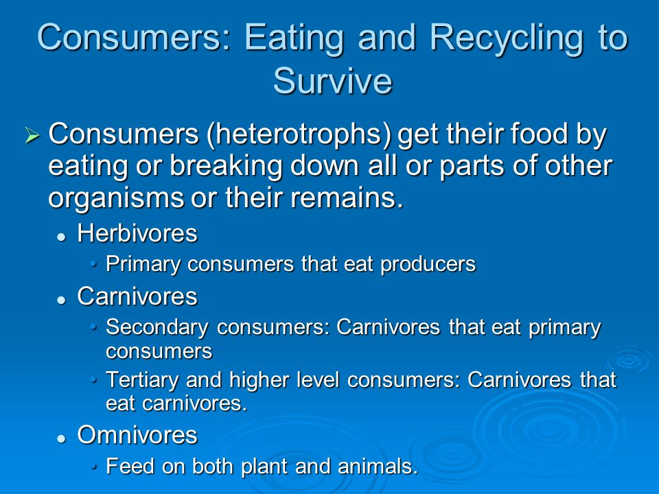 Consumers: Eating and Recycling to Survive