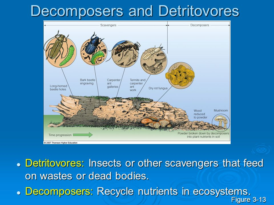 Decomposers and Detritovores