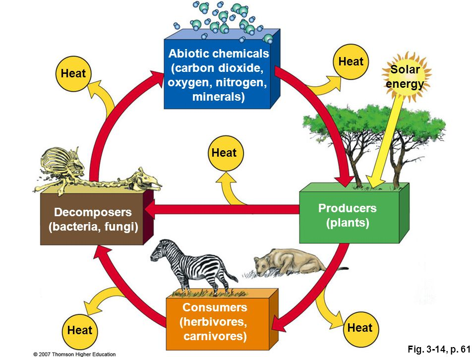 Abiotic chemicals (carbon dioxide, Heat oxygen, nitrogen, Solar Heat