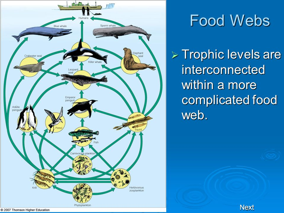 Food Webs Trophic levels are interconnected within a more complicated food web. Next