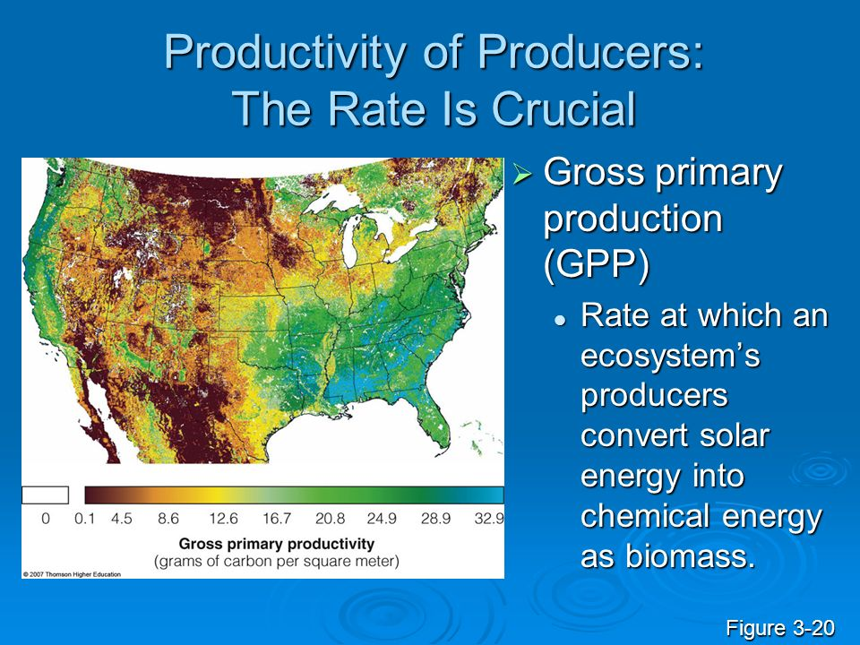 Productivity of Producers: The Rate Is Crucial