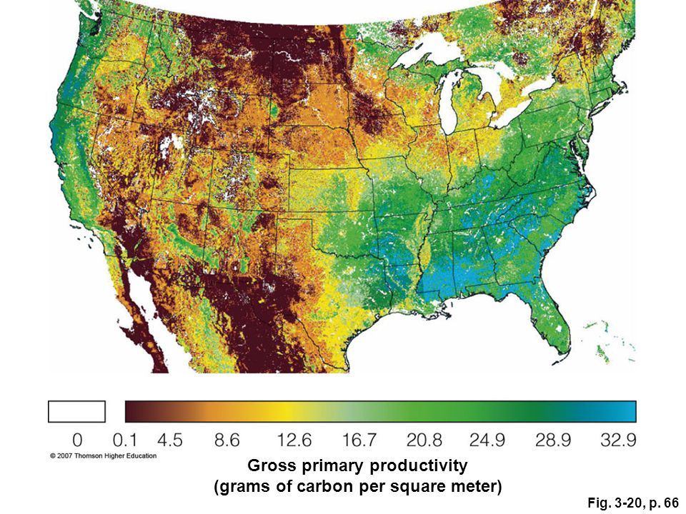 Gross primary productivity (grams of carbon per square meter)