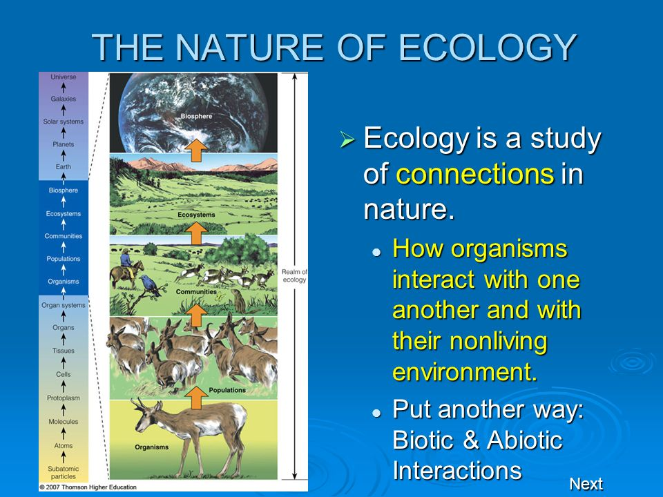 THE NATURE OF ECOLOGY Ecology is a study of connections in nature.