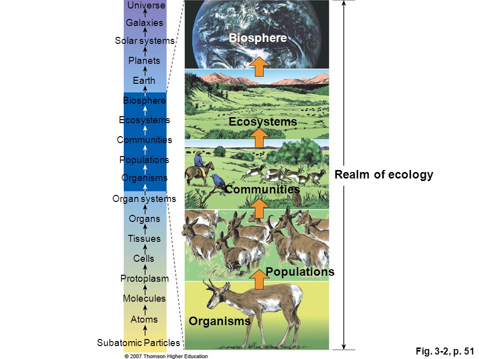 Biosphere Ecosystems Realm of ecology Communities Populations