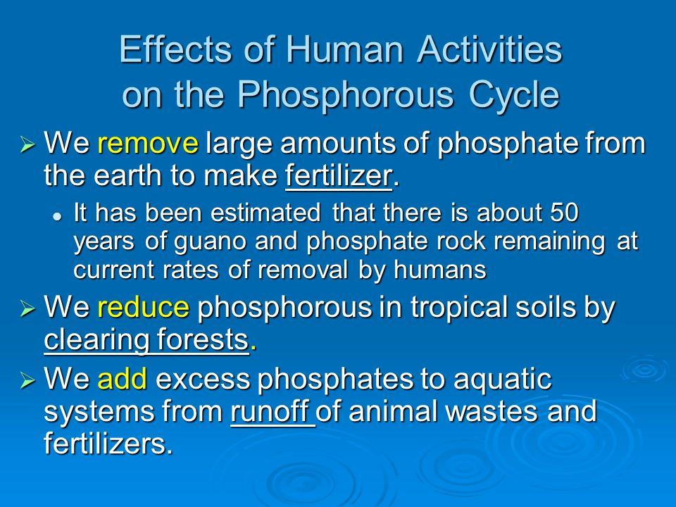 Effects of Human Activities on the Phosphorous Cycle
