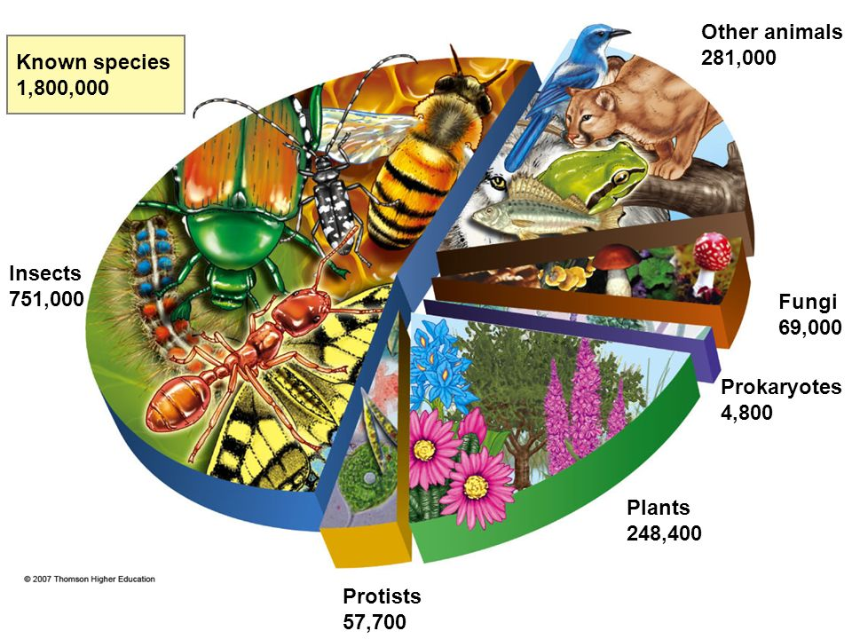 Other animals 281,000 Known species 1,800,000 Insects 751,000 Fungi