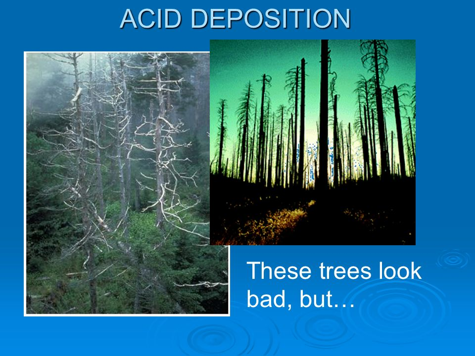 ACID DEPOSITION These trees look bad, but…