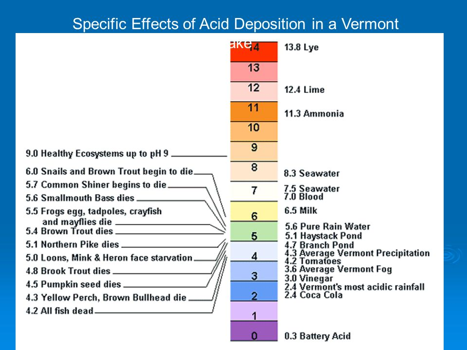 Specific Effects of Acid Deposition in a Vermont Lake
