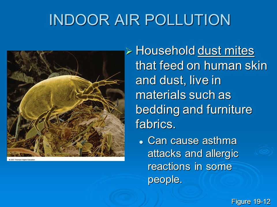INDOOR AIR POLLUTION Household dust mites that feed on human skin and dust, live in materials such as bedding and furniture fabrics.