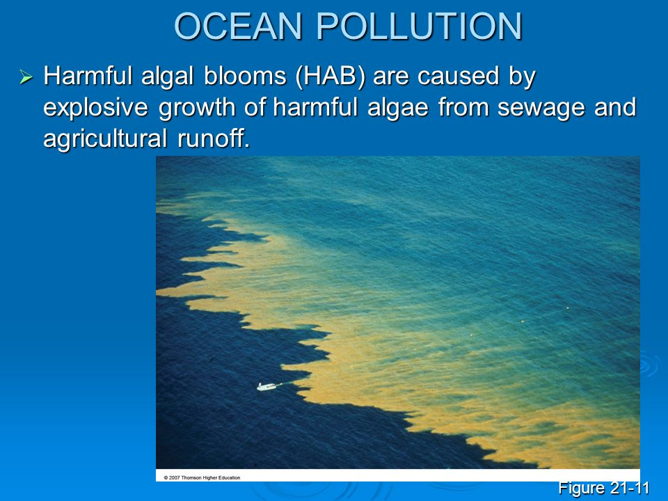 OCEAN POLLUTION Harmful algal blooms (HAB) are caused by explosive growth of harmful algae from sewage and agricultural runoff.