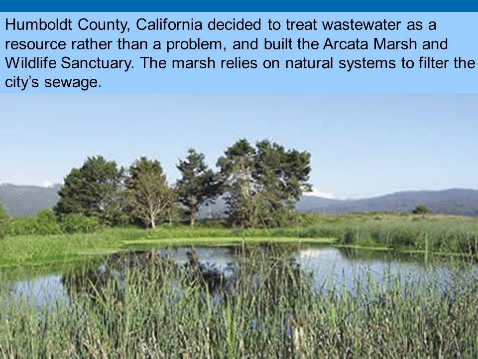 Humboldt County, California decided to treat wastewater as a resource rather than a problem, and built the Arcata Marsh and Wildlife Sanctuary.