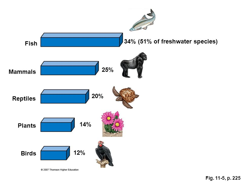 34% (51% of freshwater species) Fish
