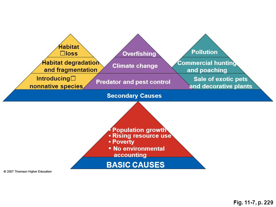 BASIC CAUSES • No environmental accounting Habitatloss Overfishing