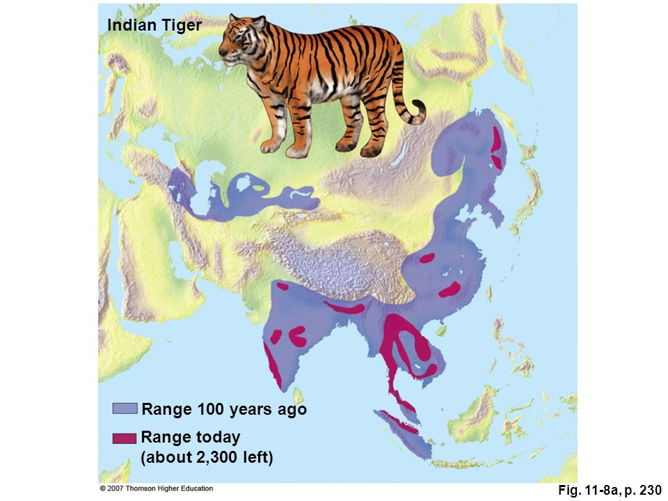 Indian Tiger Range 100 years ago Range today (about 2,300 left)