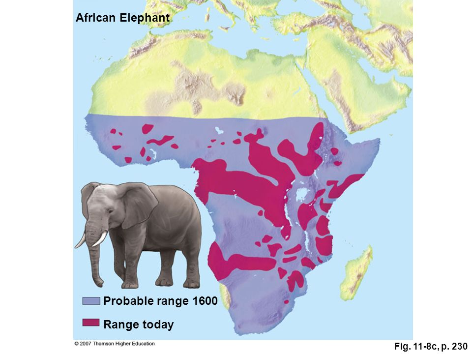 African Elephant Probable range 1600 Range today Fig. 11-8c, p. 230
