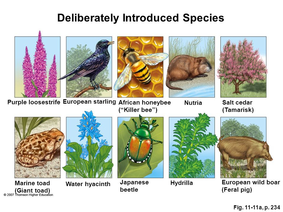 Deliberately Introduced Species