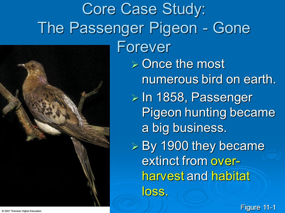 Core Case Study: The Passenger Pigeon - Gone Forever