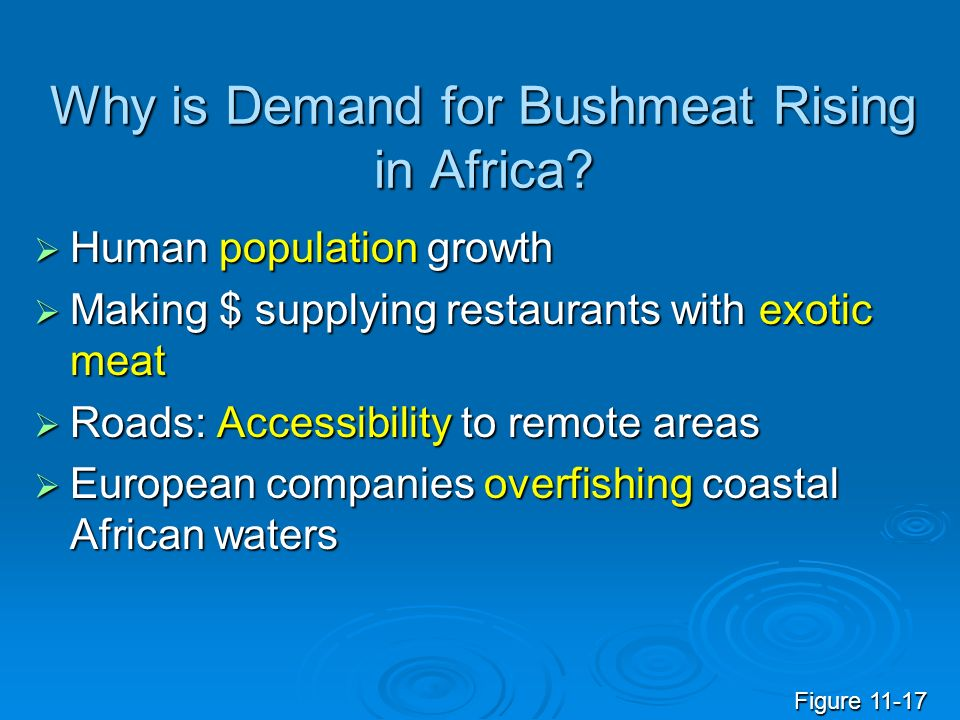 Why is Demand for Bushmeat Rising in Africa