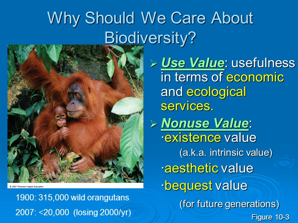 Why Should We Care About Biodiversity