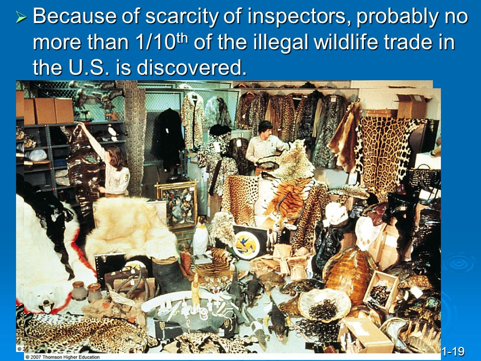 Because of scarcity of inspectors, probably no more than 1/10th of the illegal wildlife trade in the U.S. is discovered.