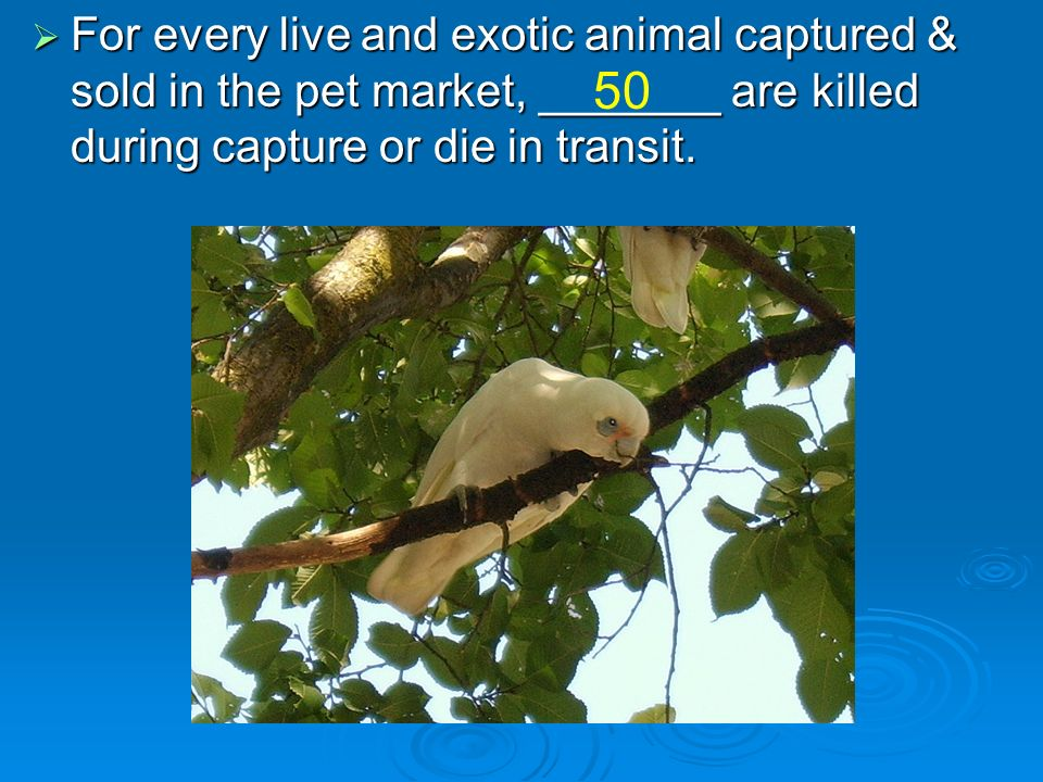 For every live and exotic animal captured & sold in the pet market, _______ are killed during capture or die in transit.