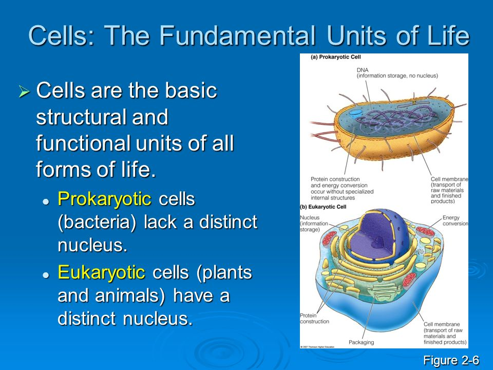 Cells: The Fundamental Units of Life
