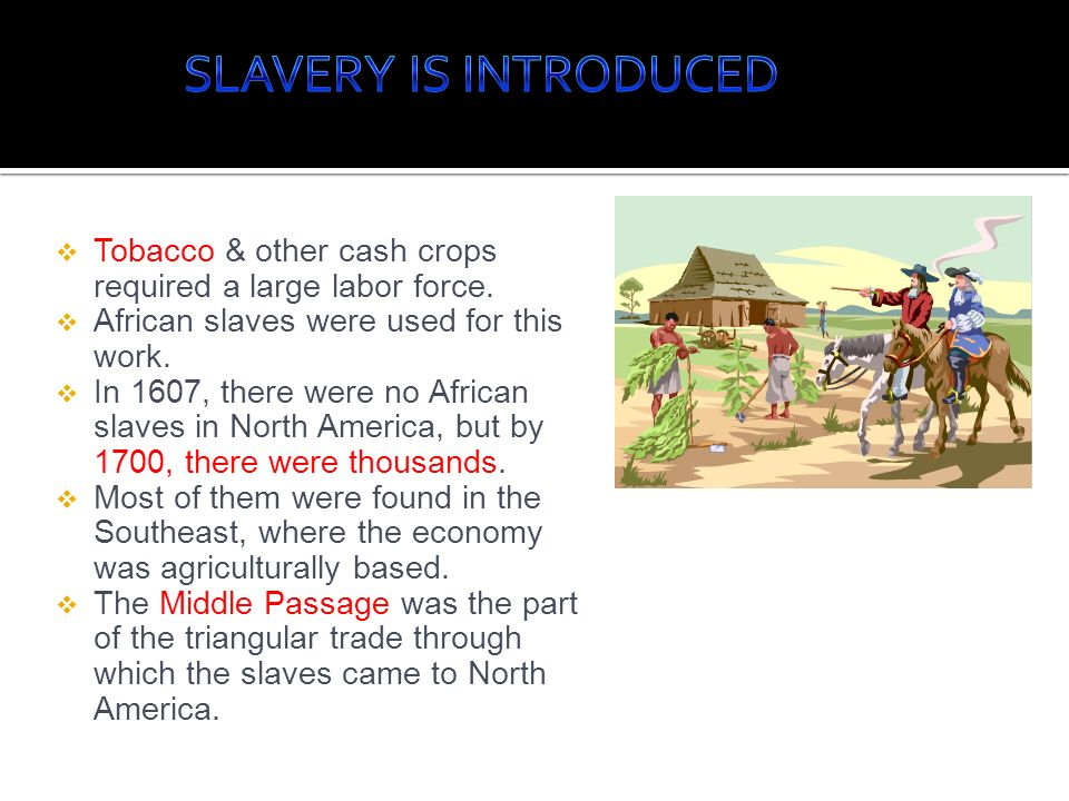 SLAVERY IS INTRODUCED Tobacco & other cash crops required a large labor force. African slaves were used for this work.